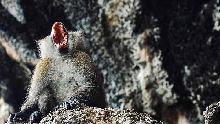Affengeist Ruhe