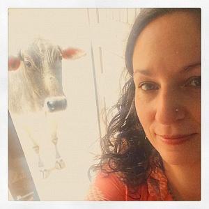 Patricias' Cows of Kashi