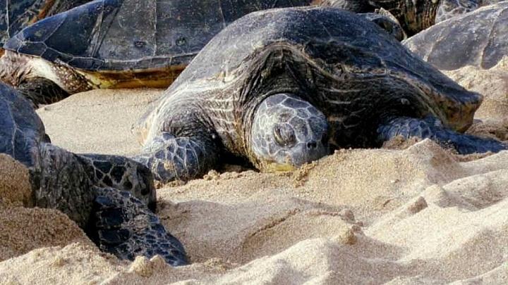Stille Schildkröten